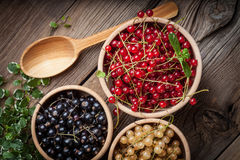 Redcurrant, blackcurrant, white currant fruit. Stock Photography