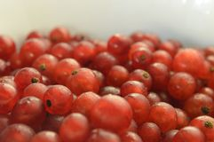 Redcurrant. A bowl of red currant Royalty Free Stock Image