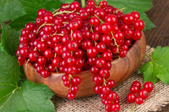 Redcurrant bowl Stock Photography