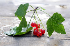 Redcurrant, branch on wooden background Stock Image