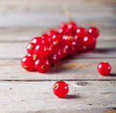 Redcurrant branch  on a wooden background Stock Image
