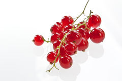 Redcurrant Bunch Royalty Free Stock Image