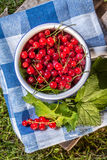 Redcurrant. Stock Photography