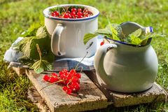 Redcurrant. Royalty Free Stock Photo