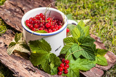 Redcurrant. Stock Photos