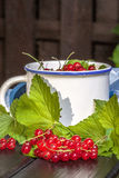 Redcurrant. Royalty Free Stock Image
