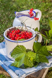 Redcurrant in a ceramic container. Stock Photography