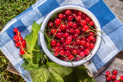Redcurrant in a ceramic container. Royalty Free Stock Photos