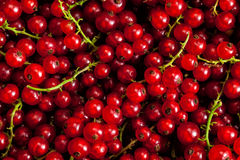 Redcurrant close up Stock Photography