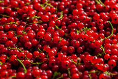 Redcurrant close up Stock Image