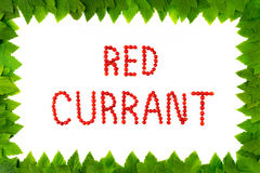 Red currant berries on white background. Fruit font, letters. Frame of leaves Royalty Free Stock Images