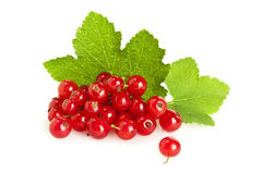 Redcurrant fruit on their leaves isolated Royalty Free Stock Photography
