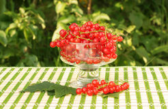 Redcurrant in a glass bowl Royalty Free Stock Image
