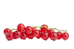 Redcurrant isolated Royalty Free Stock Photo