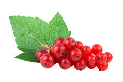 Redcurrant isolated on white Stock Photography