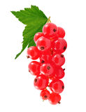 Redcurrant Stock Photography