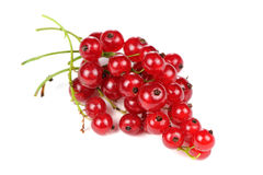 Redcurrant Isolated on White Background Royalty Free Stock Photos