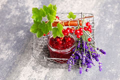 Redcurrant jam Stock Photos