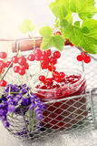 Redcurrant jam Royalty Free Stock Photo