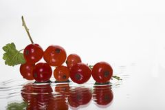 Redcurrant laing in water drops background Royalty Free Stock Photo