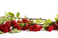 Redcurrant with leafes. On white background stock images
