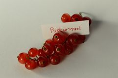 Redcurrant. With  logo on a white background Stock Photos