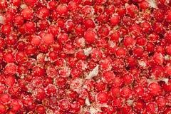 Redcurrant med socker Arkivfoto