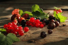 Redcurrant Royalty Free Stock Image