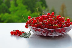 Redcurrant Stock Photo