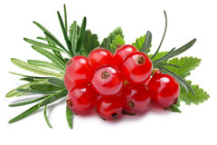 Redcurrant with rosemary, paths Royalty Free Stock Photography