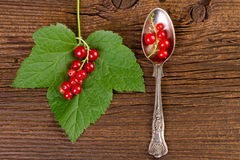 Redcurrant on a silver spoon with leaf over vintage background Stock Image