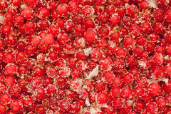 Redcurrant with sugar Stock Photo