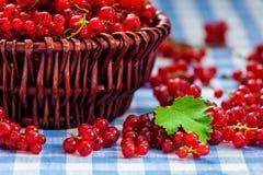 Redcurrant w łozinowym pucharze na stole Zdjęcia Royalty Free