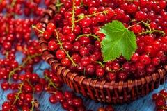 Redcurrant w łozinowym pucharze na stole Fotografia Royalty Free