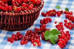 Redcurrant w łozinowym pucharze na stole Obraz Royalty Free