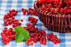 Redcurrant w łozinowym pucharze na stole Zdjęcie Stock