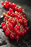 Redcurrant with water over black Stock Photography