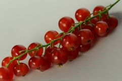 Redcurrant. On a white background Royalty Free Stock Photography