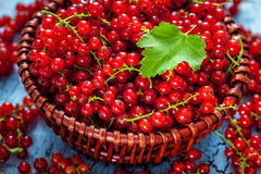Redcurrant in wicker bowl on the table Stock Photography
