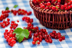 Redcurrant in wicker bowl on the table Stock Image