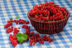 Redcurrant in wicker bowl on the table Stock Images