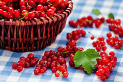 Redcurrant in wicker bowl on the table Royalty Free Stock Image