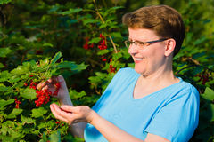 Redcurrant and woman Stock Image