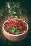 Redcurrant in wooden bowl. Royalty Free Stock Image