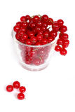 Redcurrants Royalty Free Stock Photography