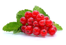 Redcurrants Stock Images
