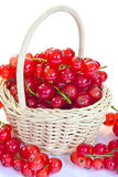 Redcurrants in basket Stock Image