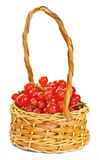 Basket of redcurrant Royalty Free Stock Photo