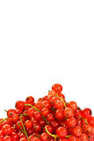 Background of redcurrants Royalty Free Stock Image