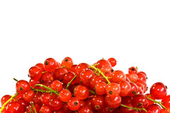 Redcurrants background Royalty Free Stock Image